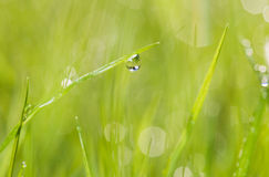 Wet spring grass Royalty Free Stock Photos