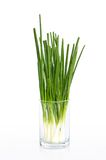 Wet spring onion in a glass  Stock Image