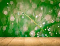 Wet springtime grass with bokeh effect and wooden floor Stock Images