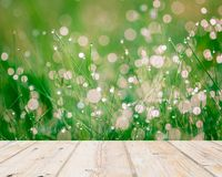 Wet springtime grass with bokeh effect and wooden floor Royalty Free Stock Images
