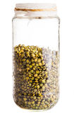Wet Sprouting french Lentils in a Glass Jar Stock Images