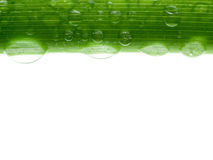 Wet stalk. Stock Photos