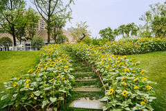 Wet steps in sunflowers on grassy slope before dwelling building Royalty Free Stock Photography