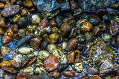 Wet Stone Royalty Free Stock Images