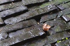Wet Stone brick Royalty Free Stock Photos