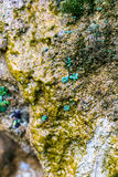 Wet stone covered with algae Royalty Free Stock Photography