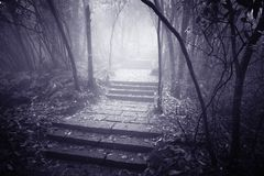 Wet stone path. Wet stone path in the foggy forest at evening time Royalty Free Stock Photography