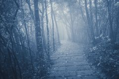 Wet stone path. Wet stone path in the foggy forest at evening time Royalty Free Stock Images
