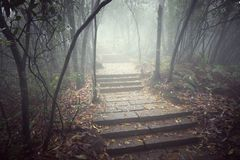 Wet stone path. Wet stone path in the foggy forest at evening time Royalty Free Stock Photo