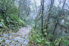 Zhangjiajie Forest Park. Royalty Free Stock Photography