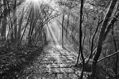 Wet stone path in Zhangjiajie Forest Park. Monochrome image of the wet stone path in Zhangjiajie Forest Park at foggy autumn morning time. China Stock Image