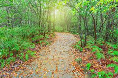 Wet stone path in Zhangjiajie Forest Park. Wet stone path in Zhangjiajie Forest Park at rainy autumn day time. China Royalty Free Stock Image