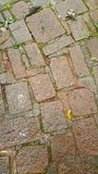 Wet stone pavement Stock Photos