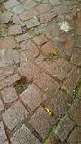 Wet stone pavement Royalty Free Stock Photo