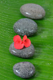 Wet stone and red flower Stock Photos