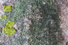 Wet stone. Texture of wet stone with moss as background Royalty Free Stock Image