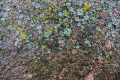 Wet stone. Texture of wet stone with moss as background Stock Photo