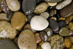 Wet stones. Group of different colored, wet stones medium sized stock images