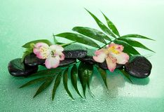 Wet stones and alstroemeria flower on howea leaf Stock Image