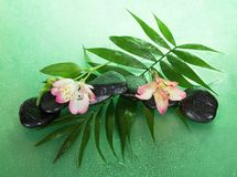 Wet stones and alstroemeria flower on a howea leaf Royalty Free Stock Image