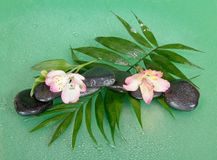 Wet stones and alstroemeria flower on howea leaf Stock Photography