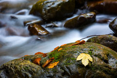 Wet stones and autumn leafs Stock Photos