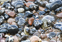 Wet stones at the beach Royalty Free Stock Photo