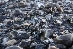 Wet stones Royalty Free Stock Image