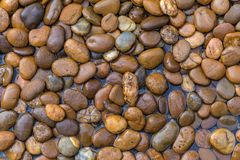 Wet stones dark pebbles with water drops in garden for backgroun. D Royalty Free Stock Images