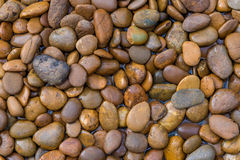 Wet stones dark pebbles with water drops in garden for backgroun. D Royalty Free Stock Image