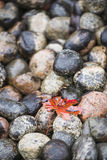 Wet stones and fall leaf Royalty Free Stock Photos