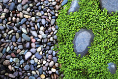 Wet Stones and grass. Half wet Stones and half wet grass royalty free stock photography