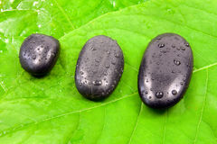 Wet  stones on the green leaves. Stock Photo
