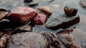 Wet stones lie on the bank of the river. Dark, brown, black, on one stone, empty shell cone Stock Image
