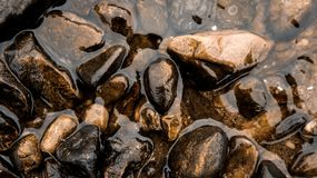 Wet stones lie on the banks of the river. Dark, brown, black Royalty Free Stock Photo
