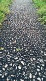 Wet stones paved walkway Stock Photos