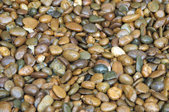 Wet stones pebbles background. Wet stones pebbles texture background Royalty Free Stock Images