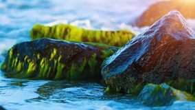 Wet stones at the sea coast. Macro view of the wet mossy stones at the tropical sea coast washed by the blue water wave in sunset with selective focus effect stock footage