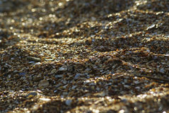 Wet  stones and shell fragments Royalty Free Stock Image