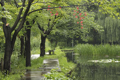Wet summer Stock Photography