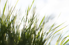 Wet sunny grass Stock Photography