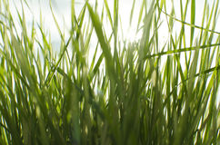 Wet sunny grass Royalty Free Stock Photography
