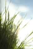 Wet sunny grass Royalty Free Stock Images