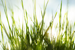 Wet sunny grass Royalty Free Stock Photos