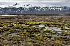 Wet surface on Svalbard Royalty Free Stock Image