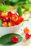 Wet sweet cherry Royalty Free Stock Photos