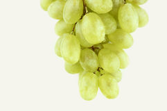 Wet sweet grapes stock photos