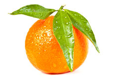 Wet tangerine. Tropical fruit. Wet tangerine with leaves isolated on a white background Royalty Free Stock Photography