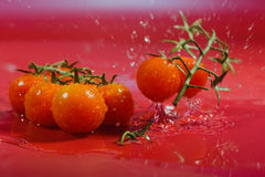 Wet tomato. Ripe tomato falling into water Stock Image
