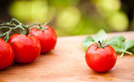 Wet Tomatoes Stock Image